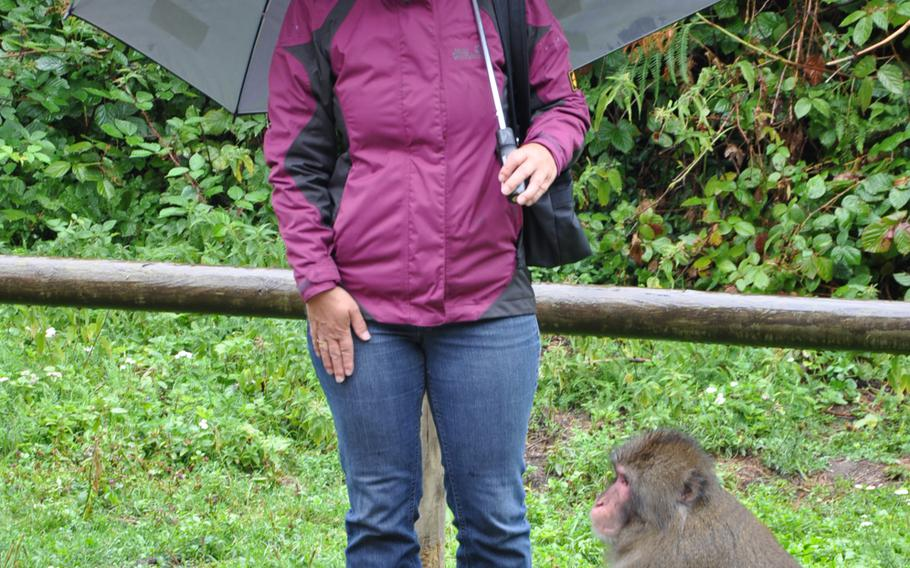 A delighted visitor has a close encounter with a Japanese macaque at Adventure Monkey Mountain in Villach, Austria, where 145 Japanese macaques roam freely and interact with guides and guests.