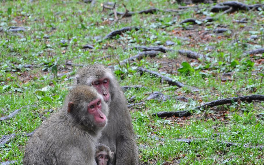 A mother and her infant  listen to the tour guide, while Oskar, in the background, a 20-year-old male, watches visitors to Adventure Monkey Mountain in Villach, Austria.