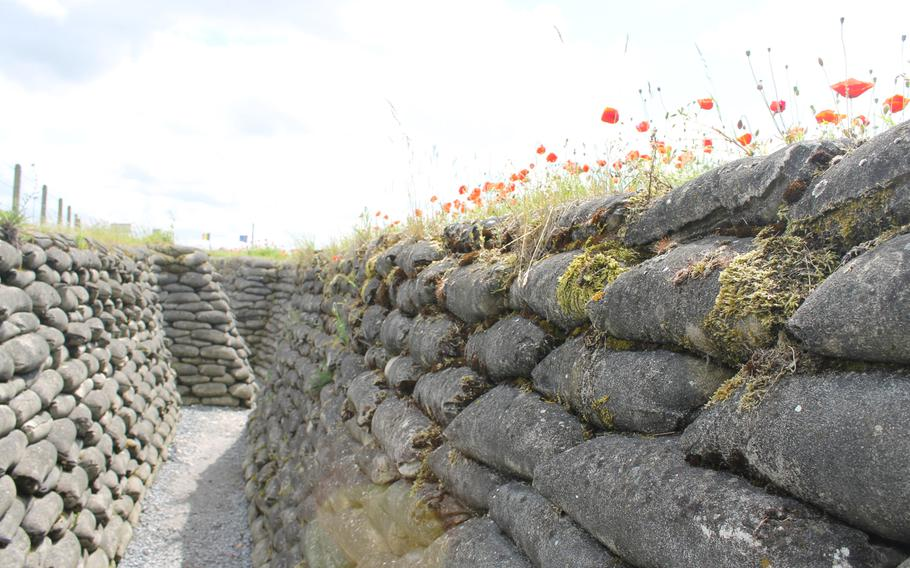 Red poppies grow along the Trench of Death in Diksmuide, Belgium. Visitors can experience what it's like to walk through a long stretch of the last surviving Belgian World War I trenches.
