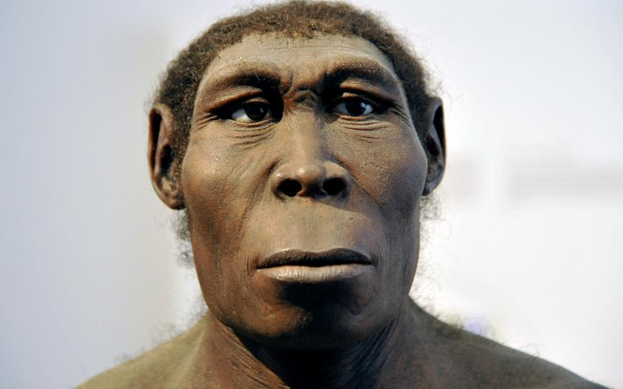 This fellow, a Homo erectus, is on display as part of the evolution of man exhibit at the Hesse State Museum in Darmstadt, Germany.