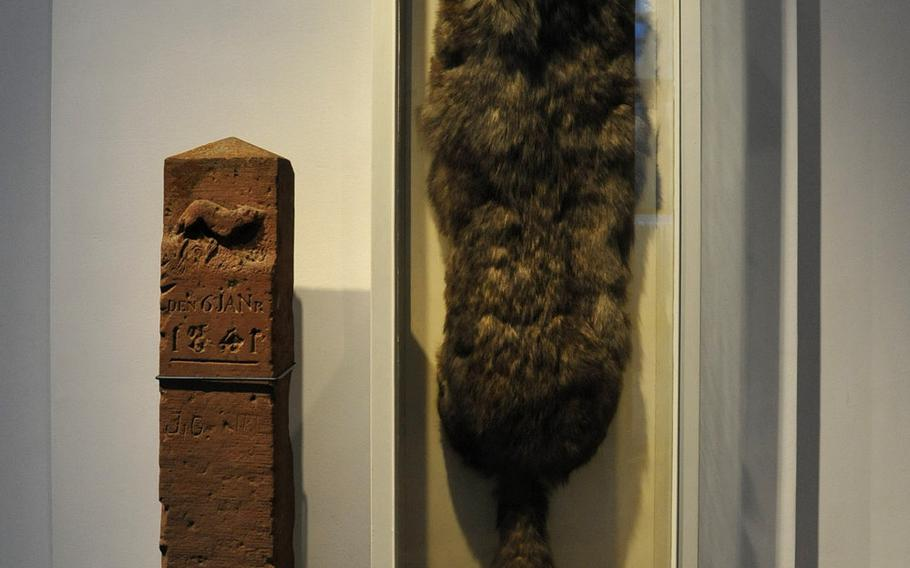 The last wolf in Hesse, shot in 1841, is one of the displays in the zoology section of the Hesse State Museum in Darmstadt, Germany.