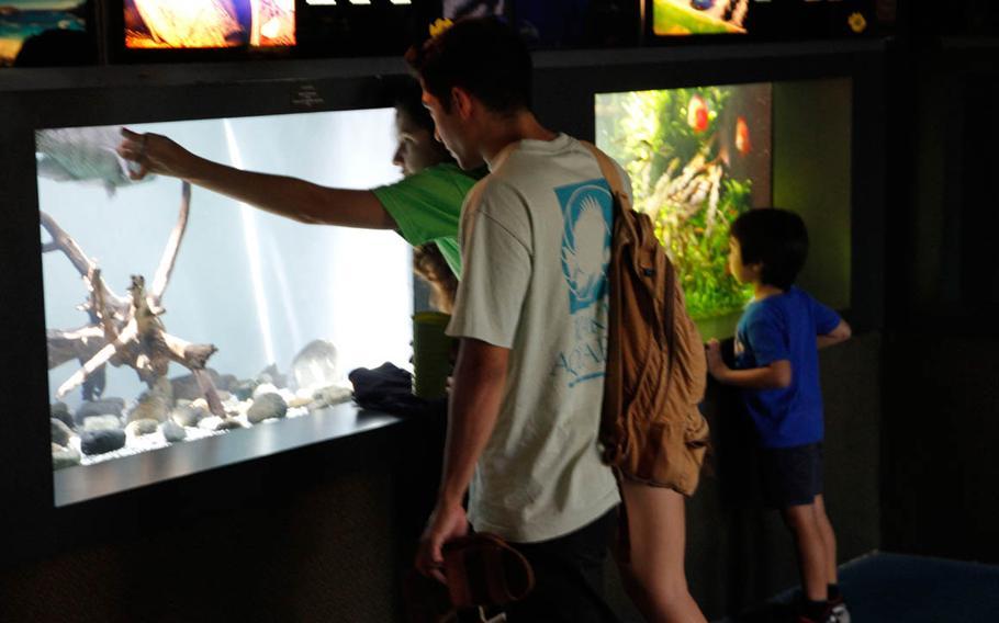 The Waikiki Aquarium, where myth meets reality: the spotted unicorn fish.