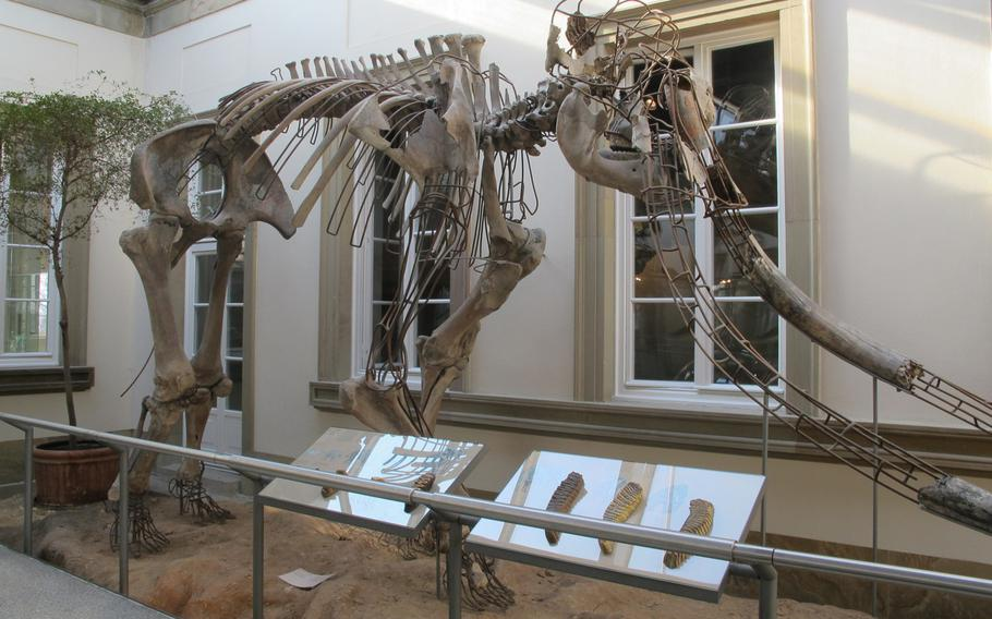 The State Museum of Natural History in Stuttgart, Germany, features about 11,000 different pieces. One of the larger exhibits is this fossil of an extinct ancestor of the modern-day elephant.  The museum, which is open Tuesday to Sunday, is a popular destination for adults and children.