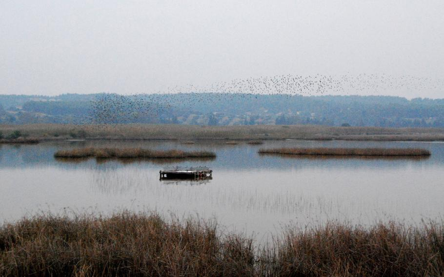 A flock of starlings twists and turns over Lake Stavronikita in the Sani Wetlands, a sanctuary for 270 different bird species in northern Greece.
