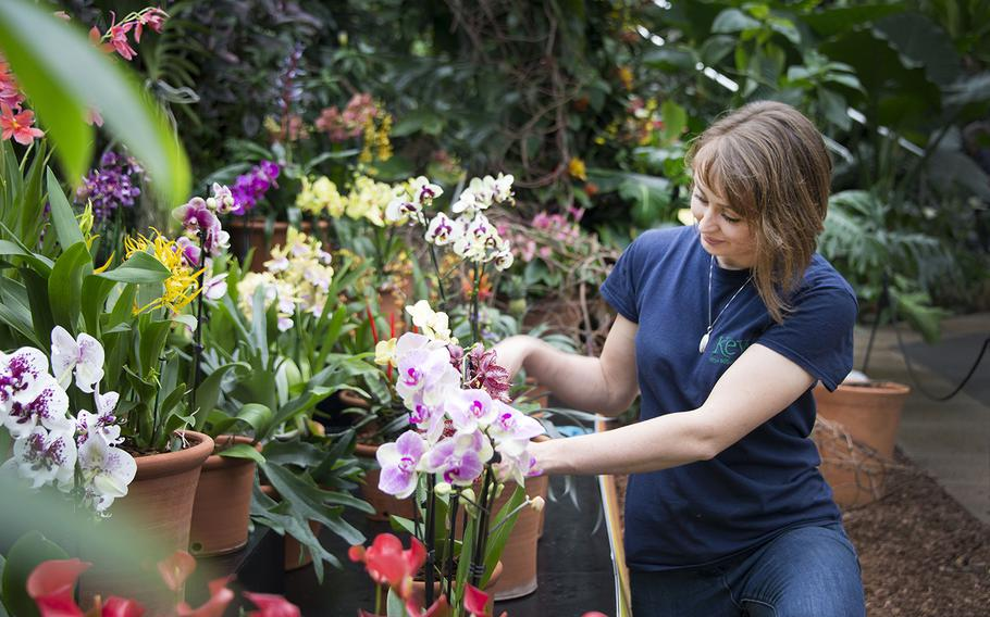 Hannah Button tends to orchids on display at Kew Gardens in London. From Feb. 4 to March 5, the gardens' popular annual Orchids Festival returns, this year with a theme celebrating the colors, culture and plant life of India. The festival will feature giant displays of exotic orchids, decorative rickshaws, Indian soundscapes, films, talks by orchid experts and more. Entry to the festival is included with day admission. Book tickets at kew.org/visit-kew-gardens/whats-on/orchids.