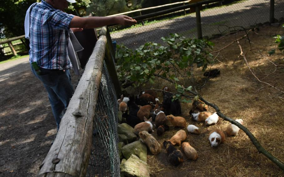 Rabbits and guinea pigs swarm near the fence as a visitor to Wildpark Potzberg throws them feed that looked like dried corn kernels.