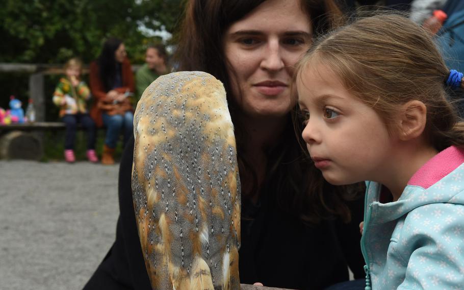 A child checks out a barn owl at Wildpark Potzberg near Foeckelberg, Germany.