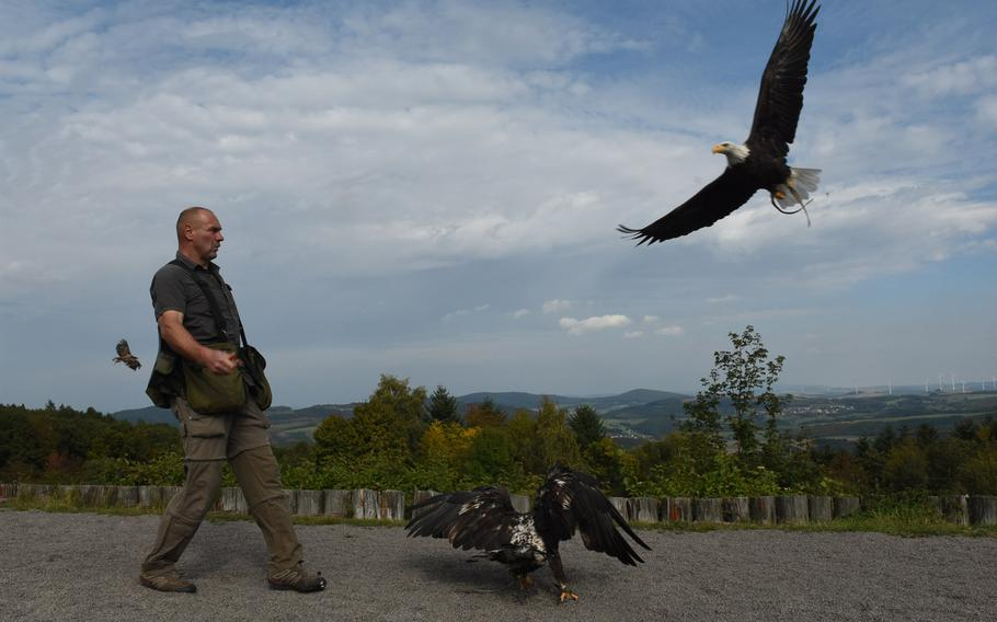 Falconer Harald Schauss choreographs a dazzling display of birds of prey every day at 3 p.m., from March until the end of October, at Wildpark Potzberg near Foeckelberg, Germany.