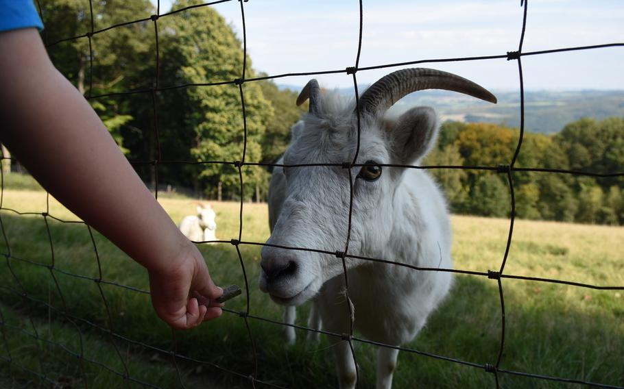 Hand feeding animals through the fence is one of the highlights for kids at Wildpark Potzberg near Foeckelberg, Germany.