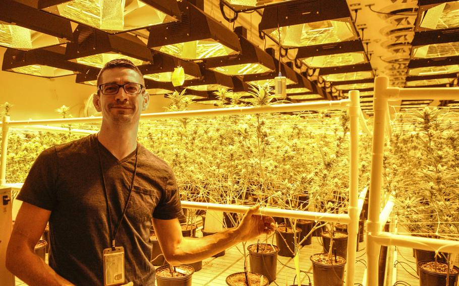 Ryan Reese, a U.S. Air Force veteran, helped to establish a marijuana cultivation facility in Phoenix over the past year and recently worked as its CEO. Reese retired as a mechanic from Beale Air Force Base and uses marijuana to treat chronic pain.