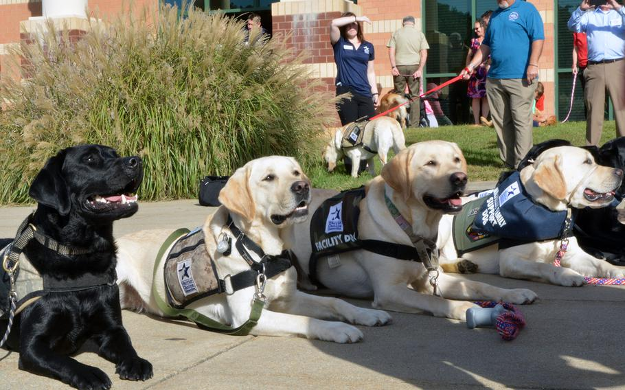 A row of service dogs pose for a photo before their graduation from Warrior Canine Connection on Oct. 7, 2017.