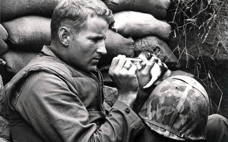 Then-Korean War correspondent Frank Praytor feeds canned milk to a kitten whose mother was killed by a mortar barrage, Oct. 18, 1952.